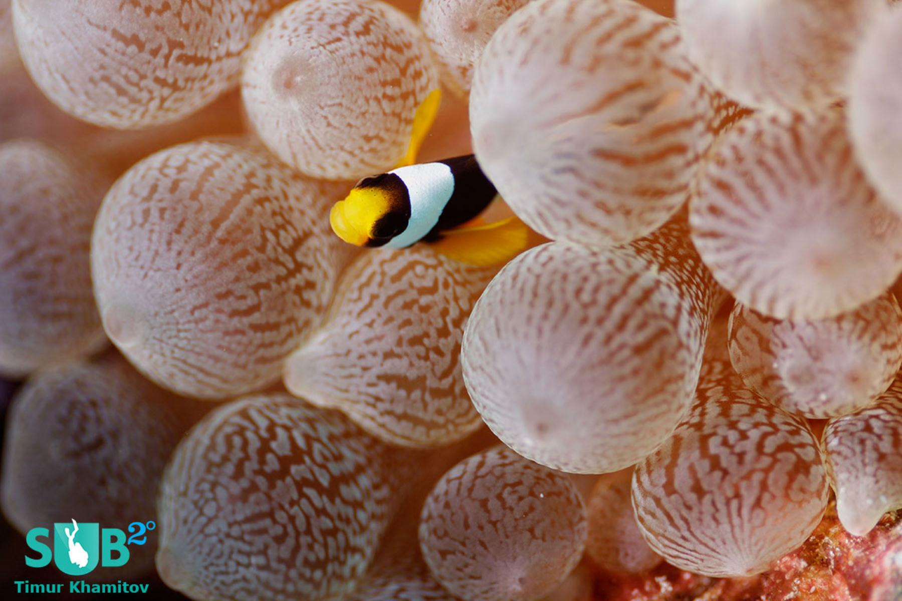 Cute little clownfish looking out at me.
