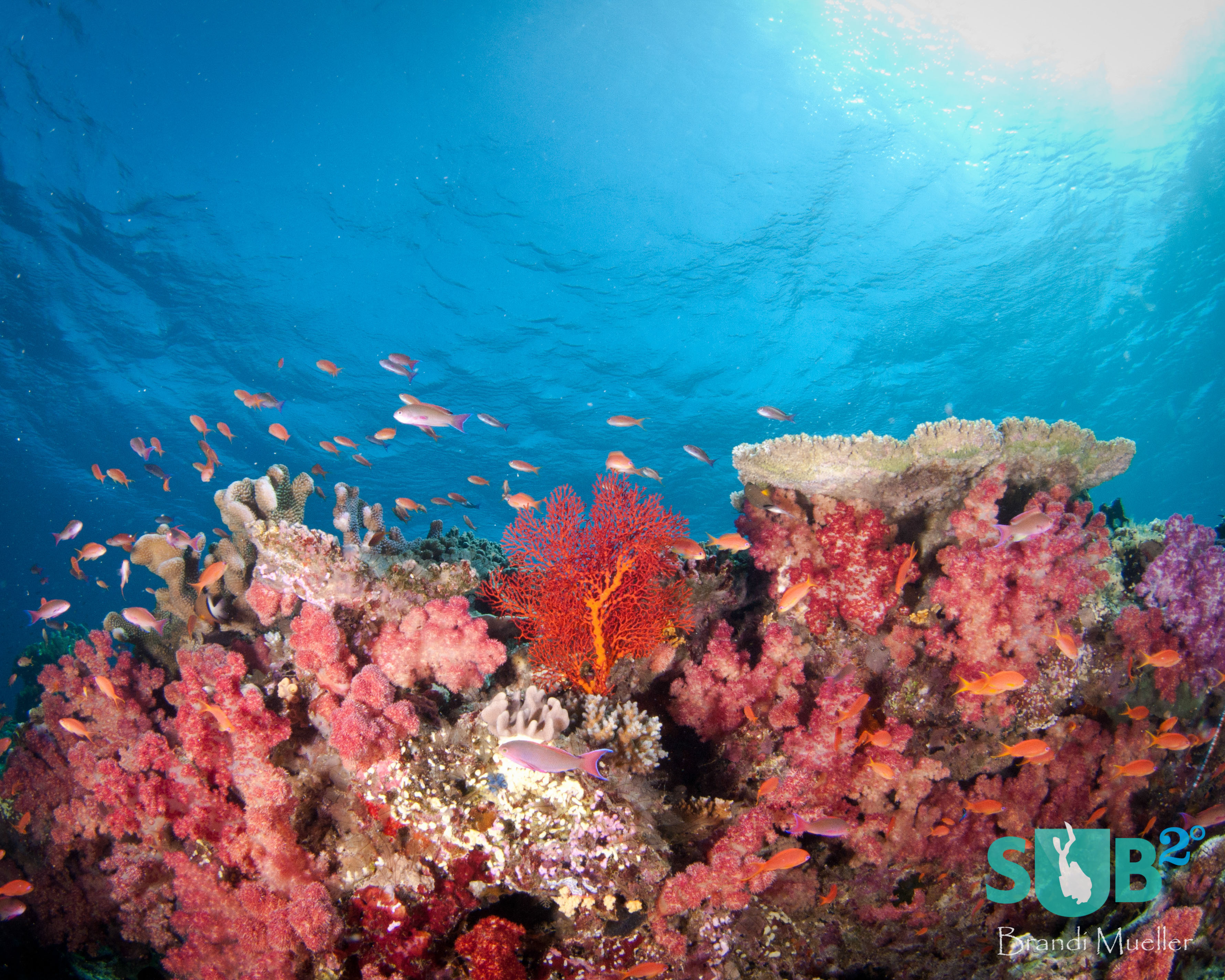 Fiji is known as the soft coral capital of the world.  Between the coral and the fish, the bright colors are endless!