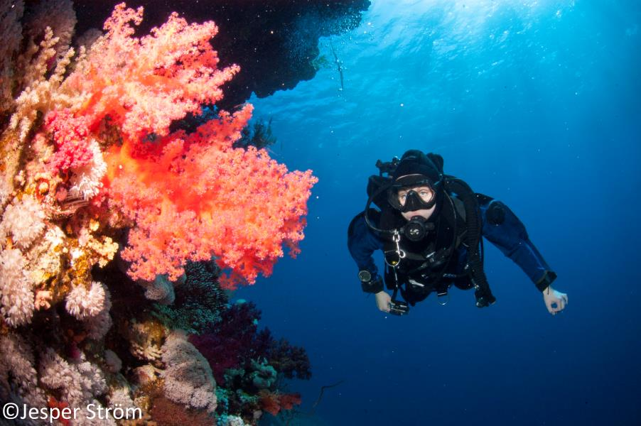 Red Sea Soft Corals of a Dream