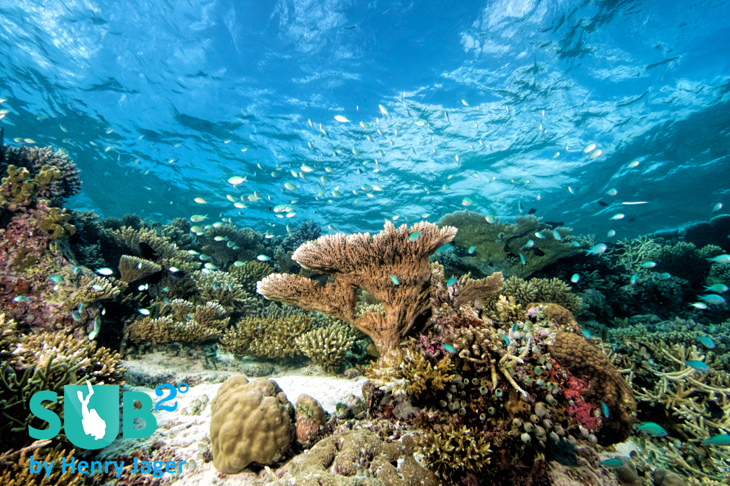 With a protected location in the inner areas of the atoll, Seenu Giri still has a pristine reef top and clear waters.