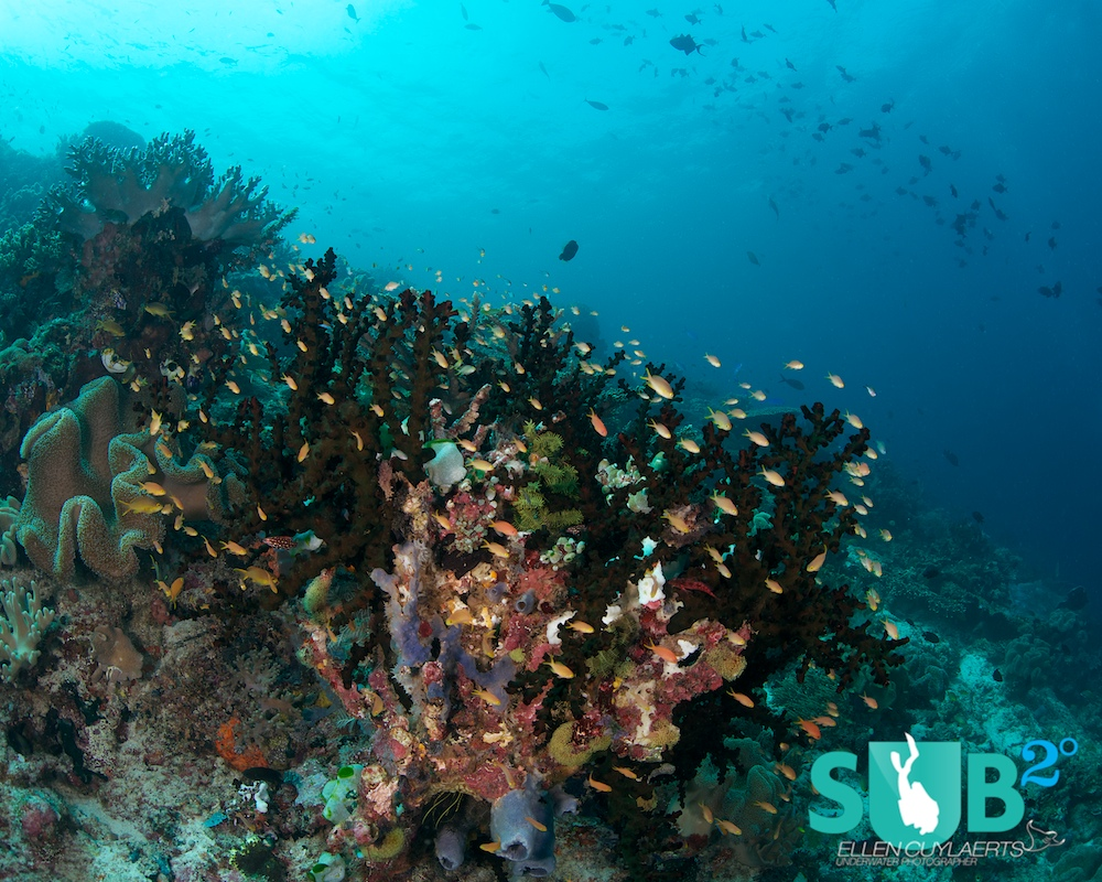 Hard coral, soft coral, sponges, anemones, small fish, big fish and little critters. Raja Ampat is a diver's paradise!
