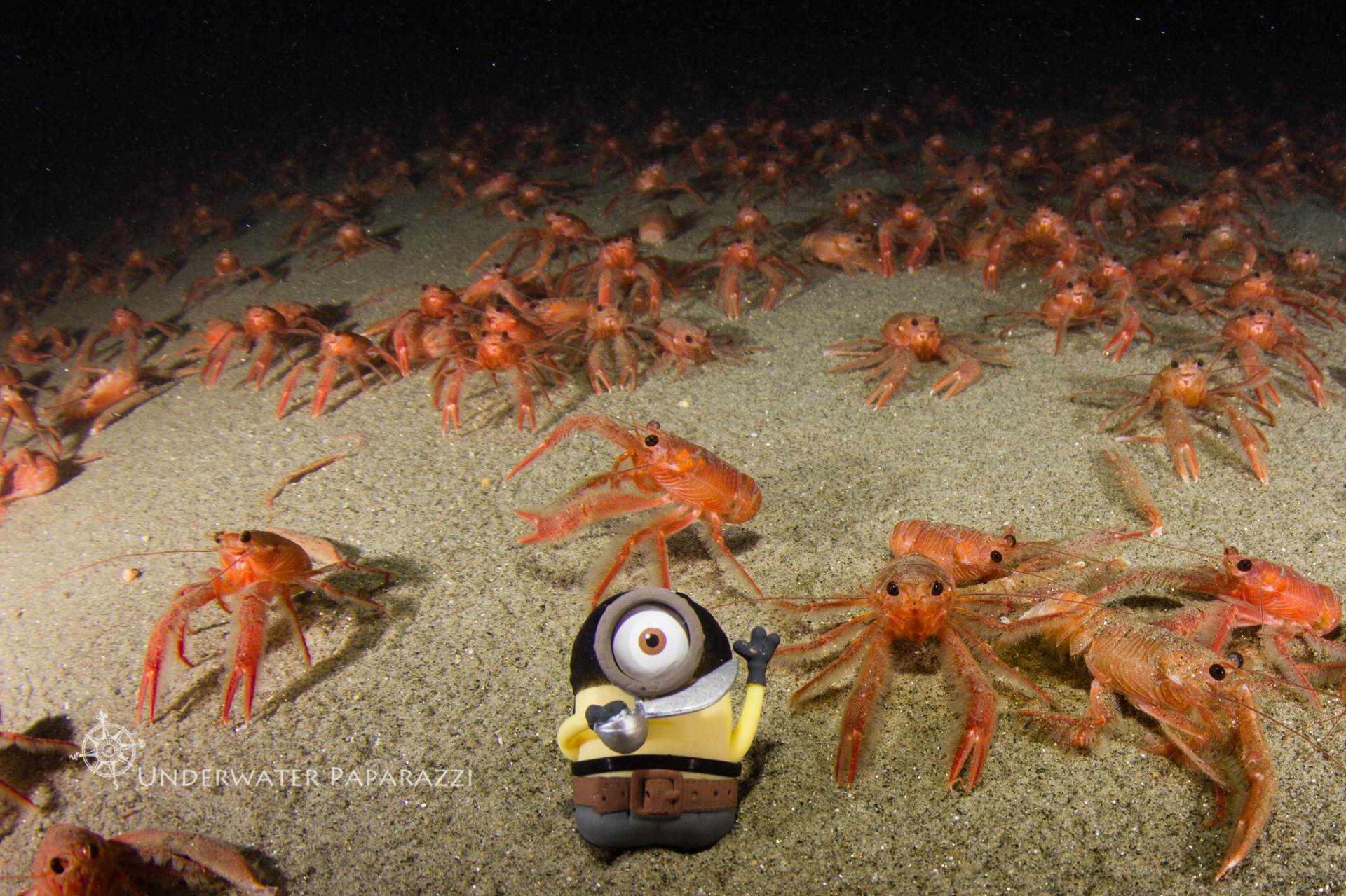 Tuna Crabs take over La jolla Shores at 80 feet below the surface