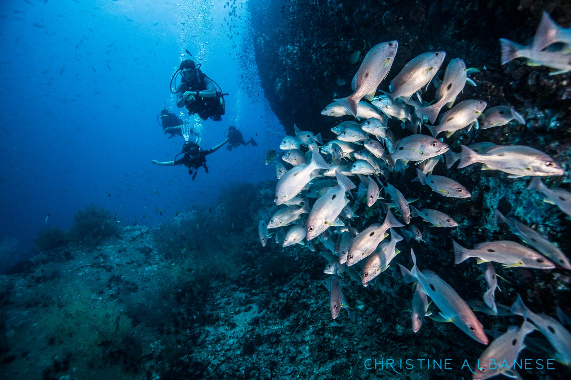 Checking out Barracuda Rock at around 25m depth, a school of one-spot snappers disperses as we approach. Chumphon's reef and sea-life never fails to impress!