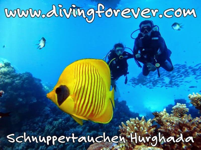 Schnuppertauchen Hurghada  www.divingforever.com