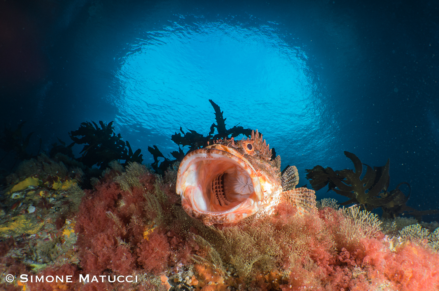 Scorpion fish ready for a mouth inspection :-)