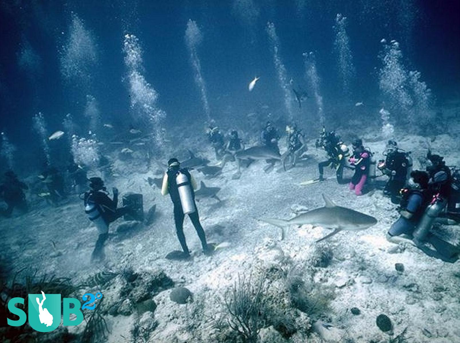 An underwater gathering of Divers and Sharks