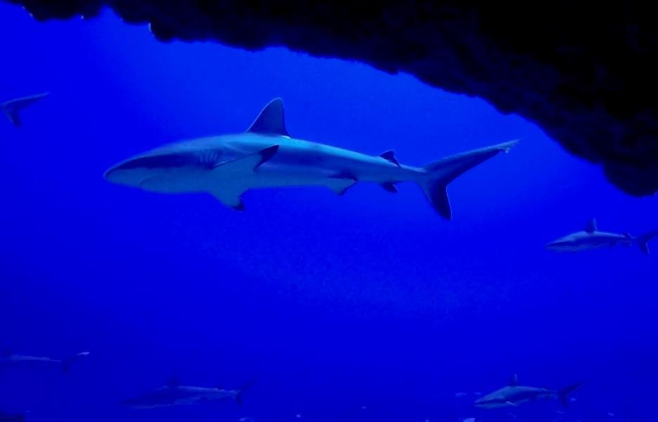 SharksFakS#2