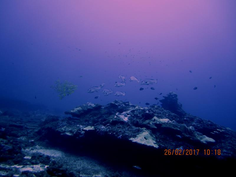 Shoal fish 2