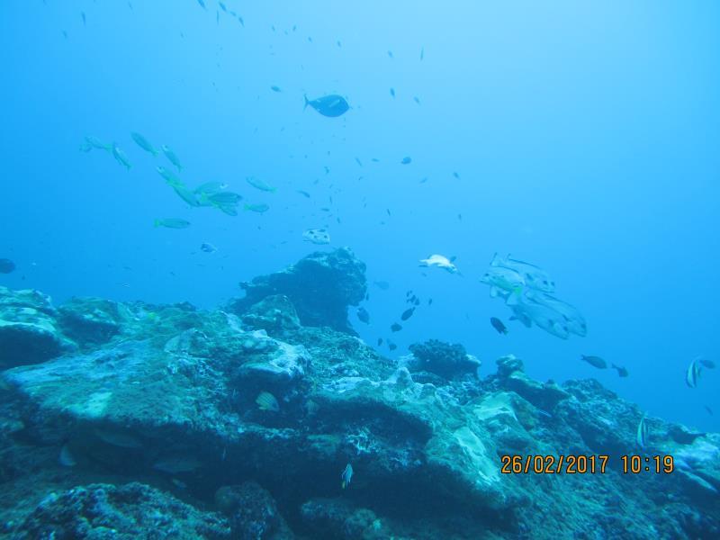 Shoal fish 3