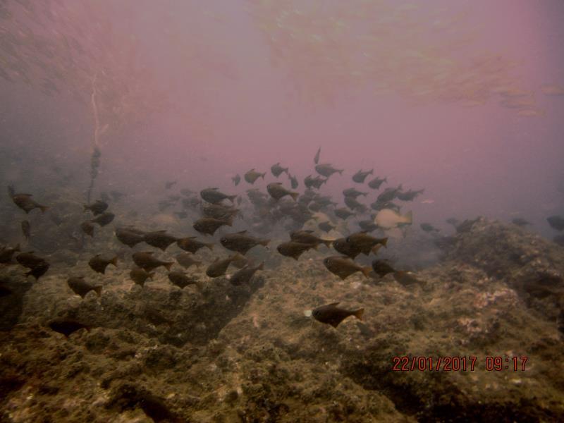Shoals of fish!