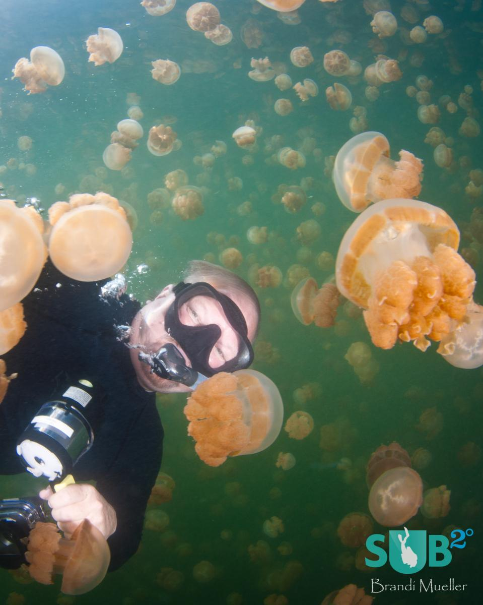 Scuba diving is not allowed in Jellyfish Lake as bubbles can collect in the jellyfish bells and cause damage to the jellyfish. Here a snorkeler poses with the jellyfish.