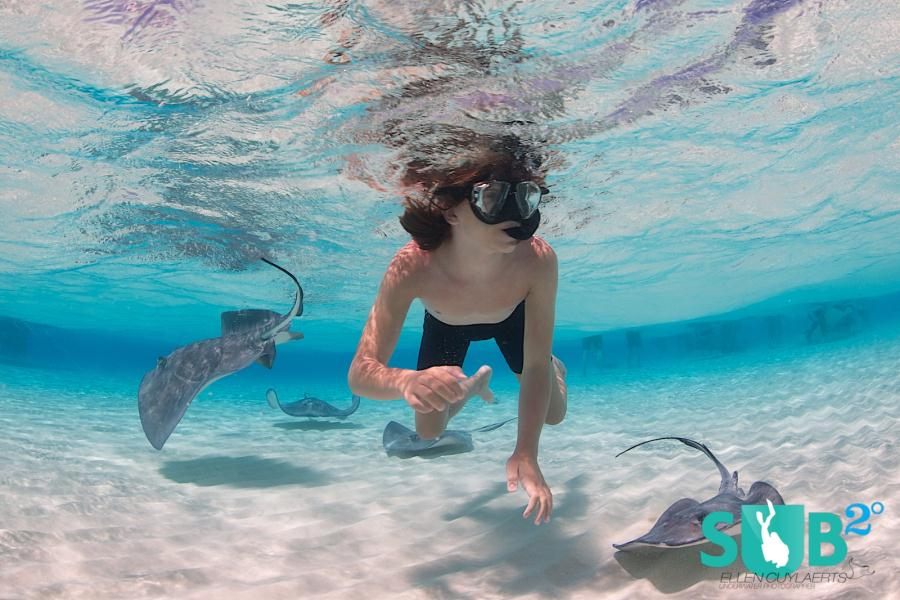 Snorkeling with Southern Stingrays