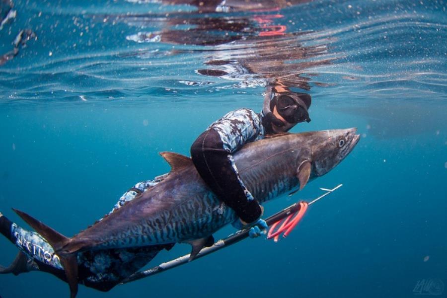 Spearfishing 01