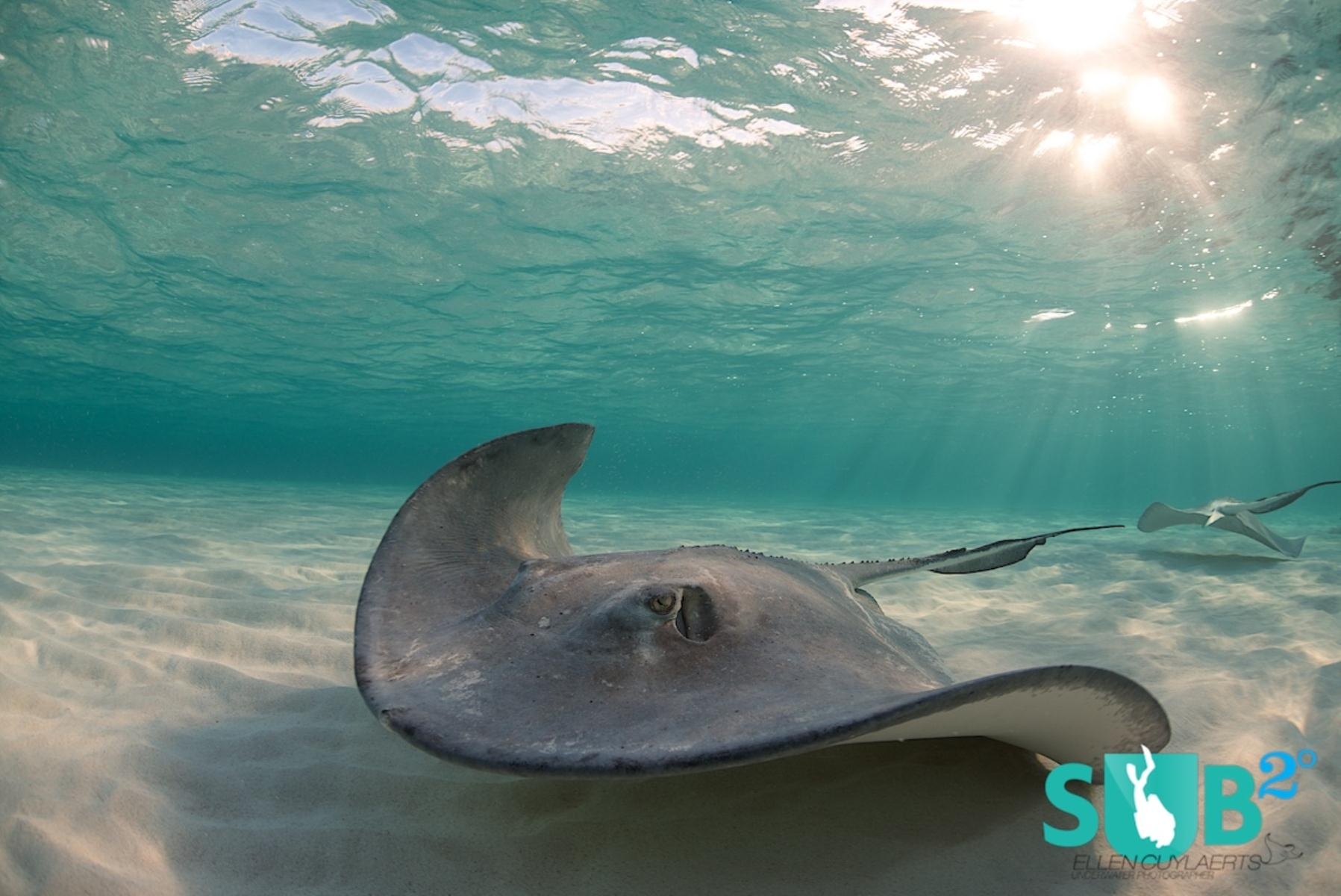 Stingray welcomes us at dawn at the Sandbar