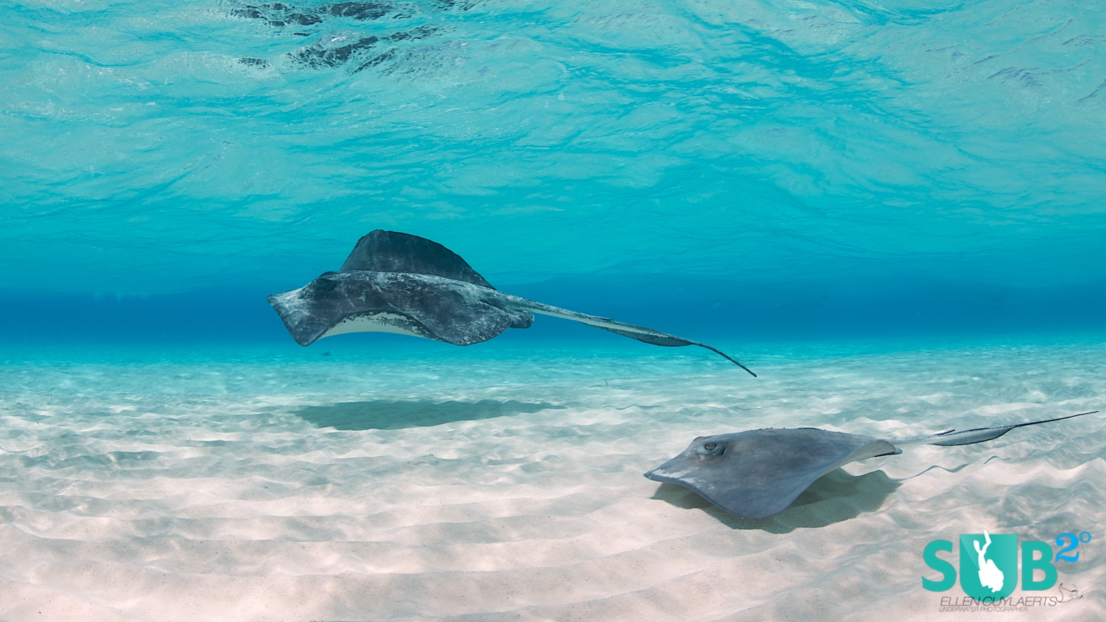 Stingray City at Grand Cayman is the place to get up close and personal with these beautiful creatures.
