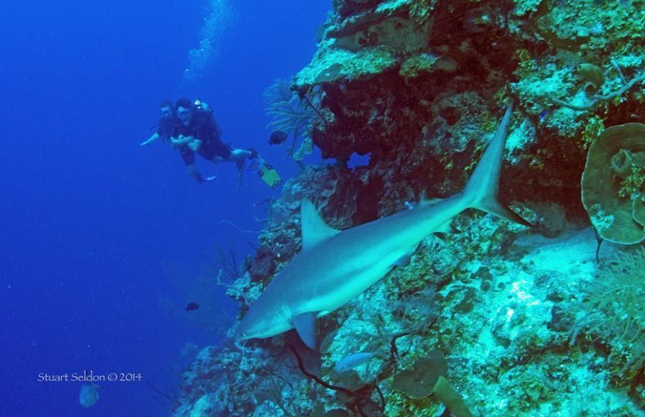 stu-seldon-sharky