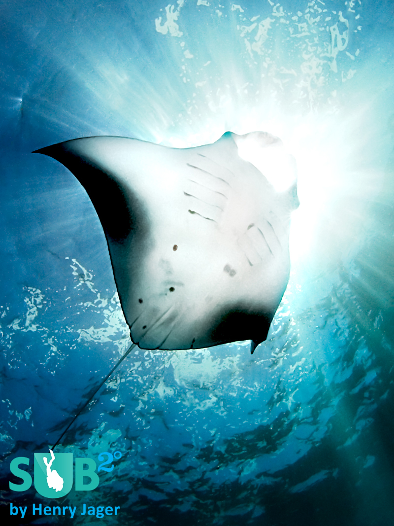 Like diving into the sun: Manta Ray at Nusa Penida.
