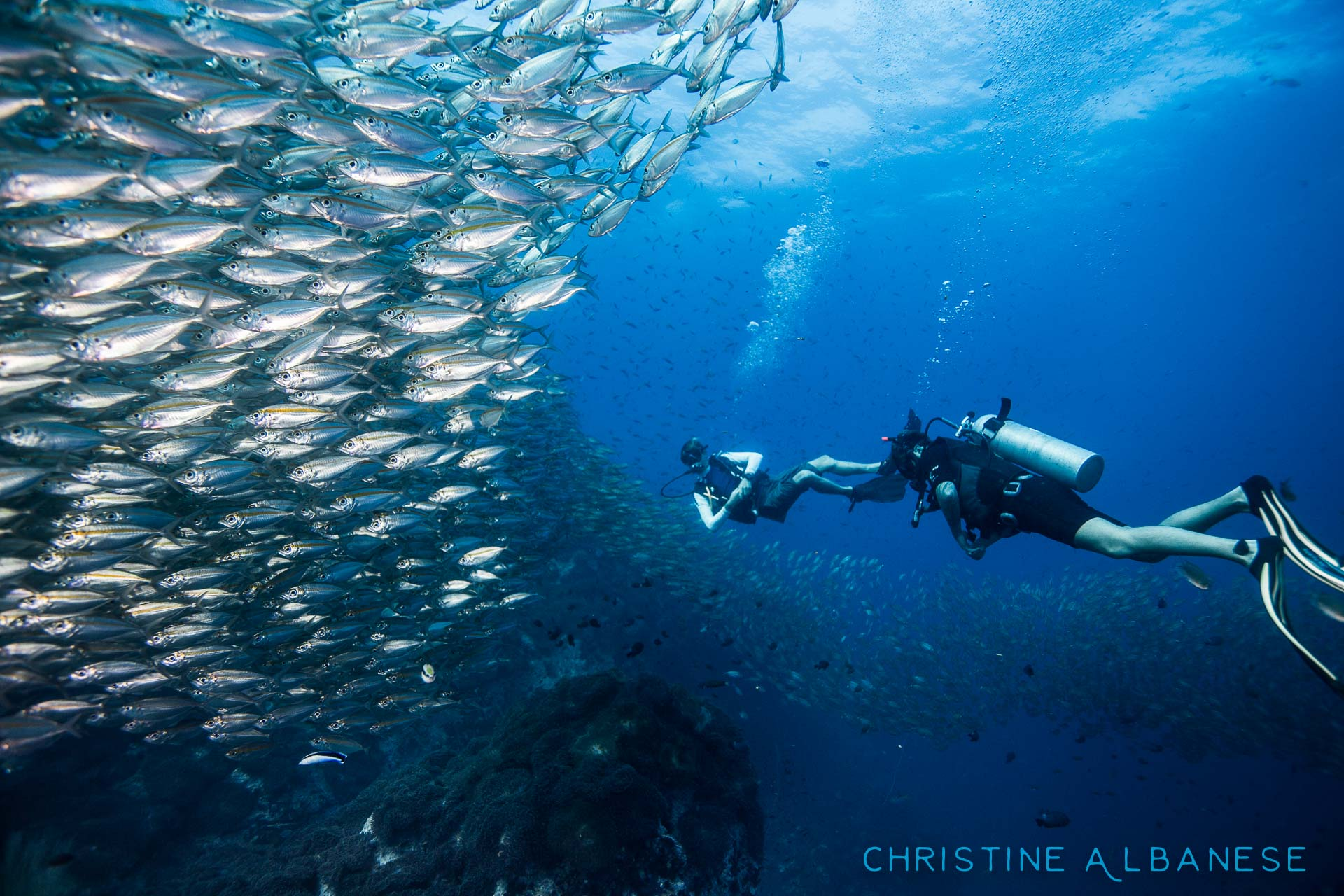 Chumphon Pinnacle is home to all kinds of amazing things! Definitely one of my favorite dive sites around Koh Tao. 😍  #underwater #underwaterphotography #uwphotography #EarthCapture #padi #wideangle #canon6d #canon1740 #ikelite #ds160 #scuba #scubadiving #divinglife #eatsleepscuba #scubaearth #natgeo #chumphon #kohtao #thailand #ocean #marinelife #adventure #discover #underwaterdiving #schoolingfish #abundance #awesome