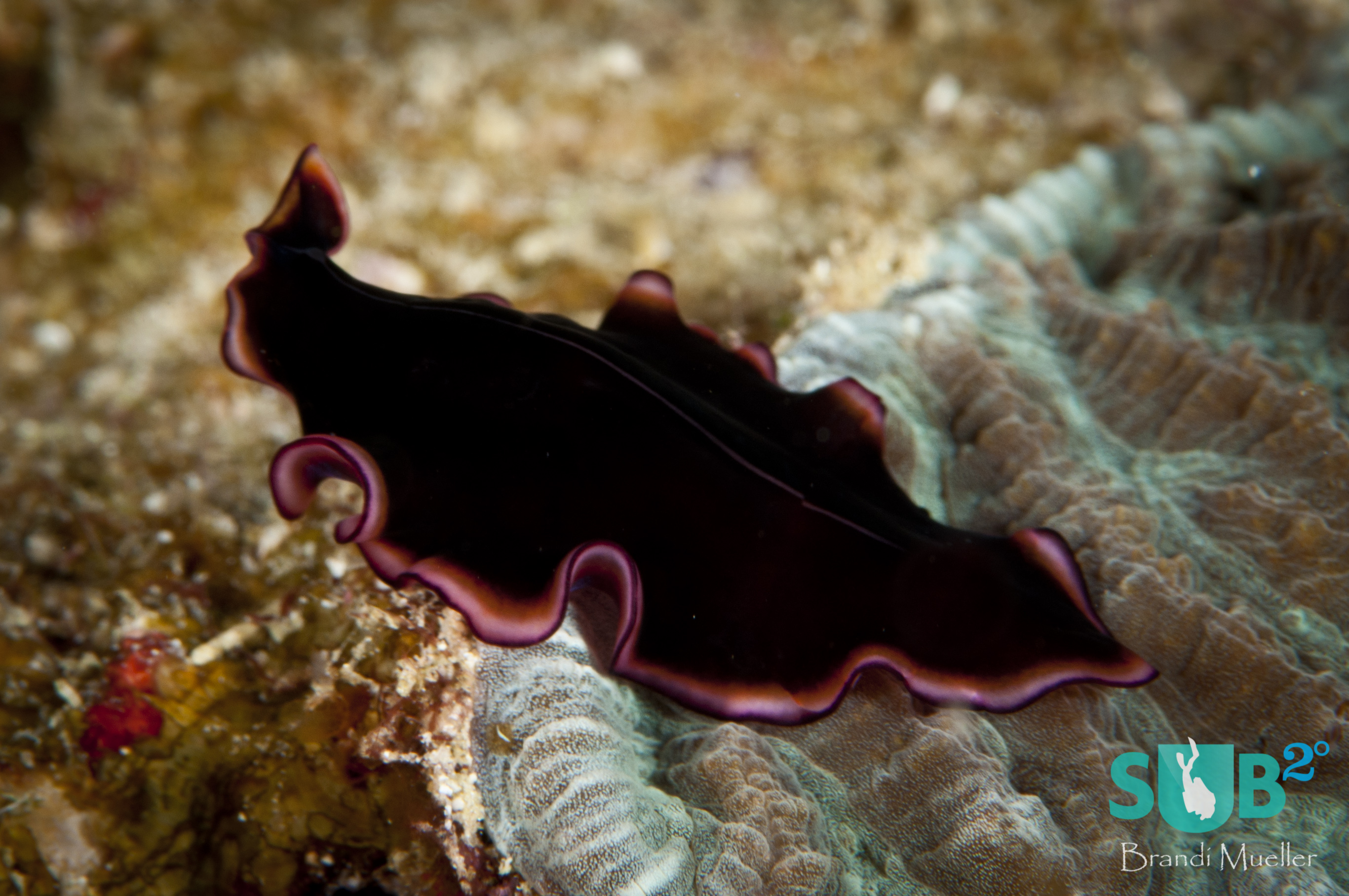 The Glorious Flatworm