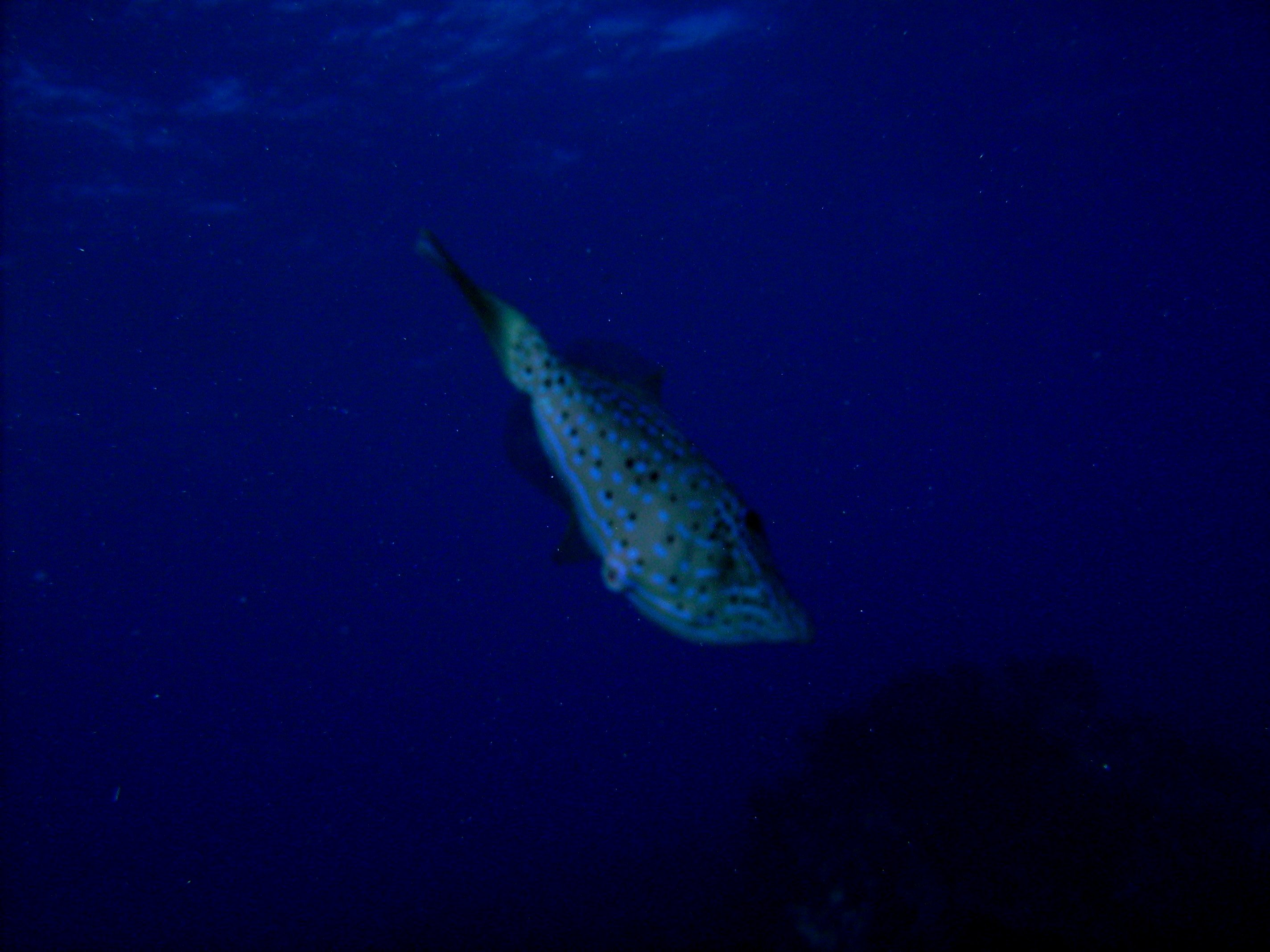 Learning about my Sea-life CD600 camera. First time with it on a reef dive and I forgot to set the filter or the auto focus.