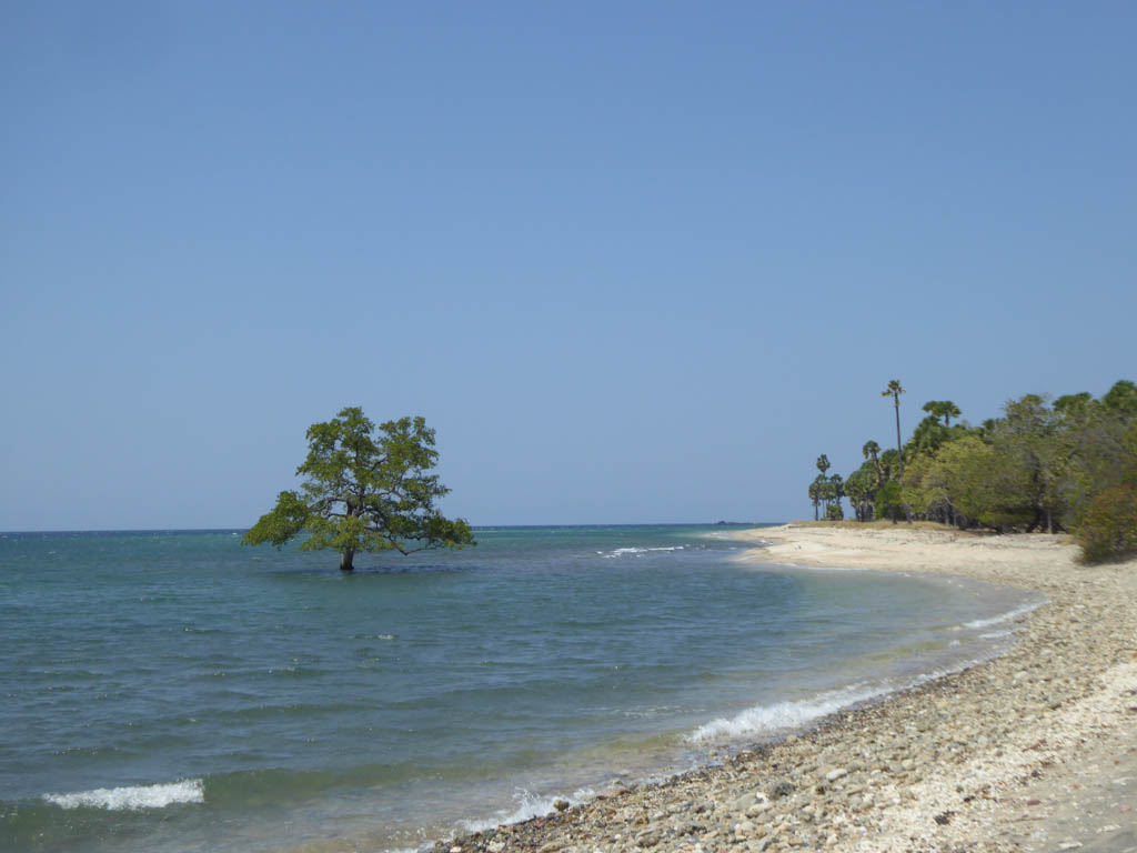 Coast in East Timor