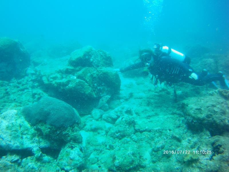 Turtel under rock and diver