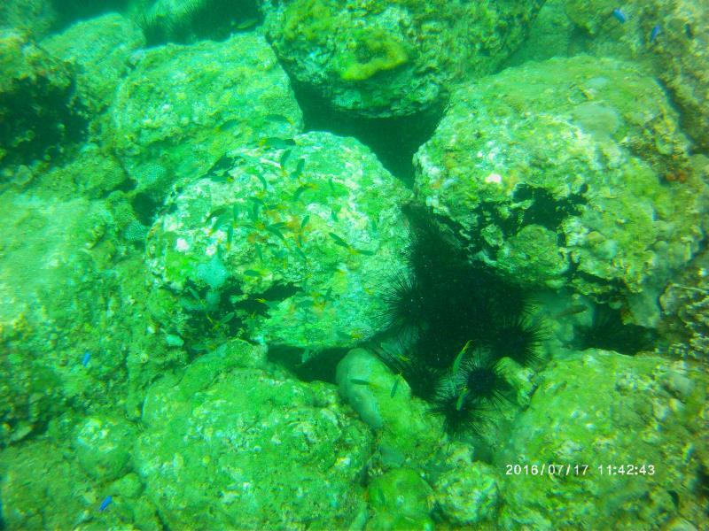Urchins_fish