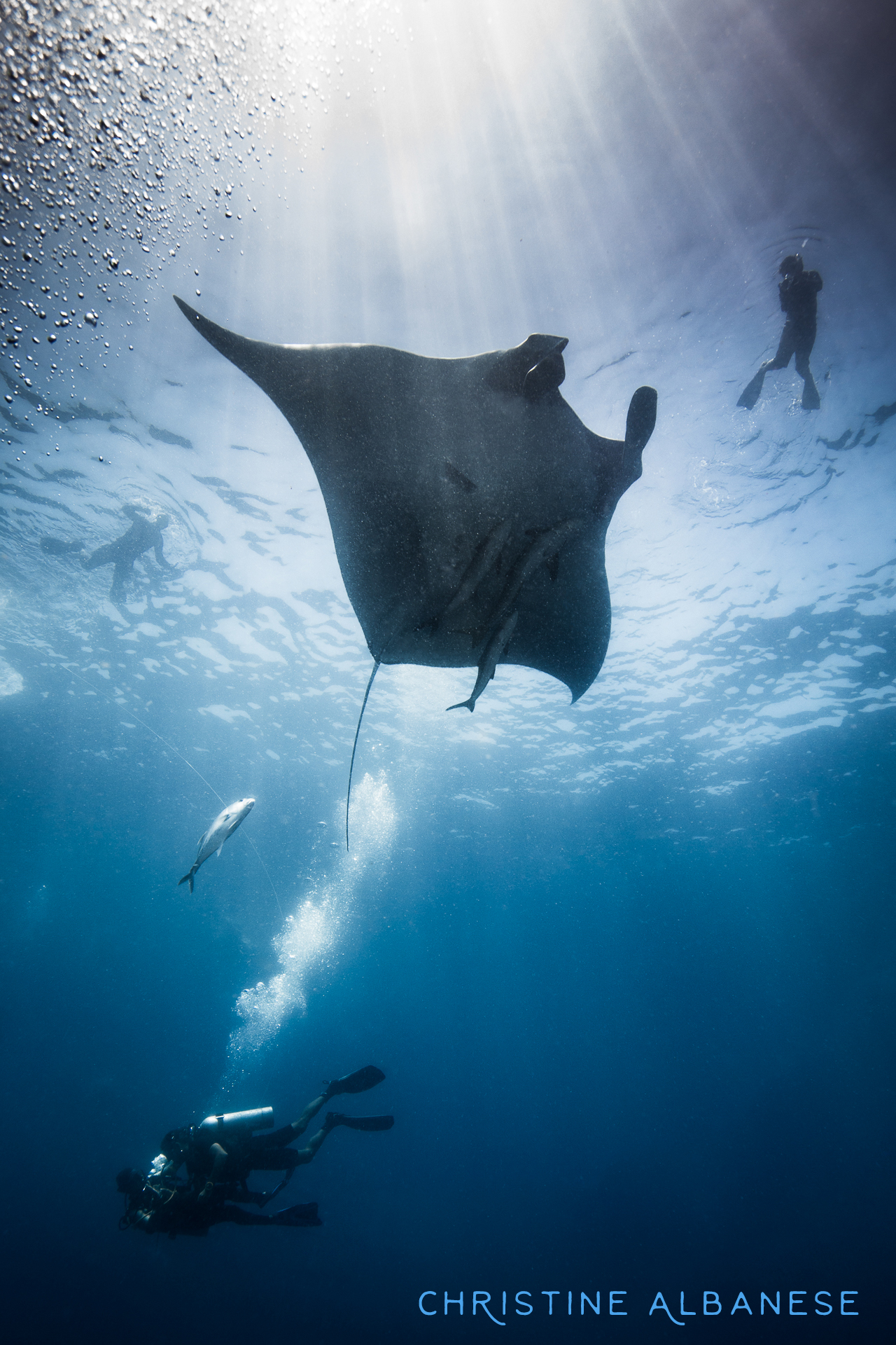 I absolutely adore Mantas!