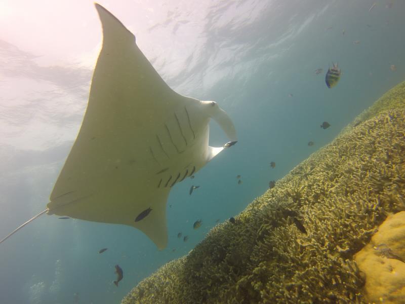 www.cruise-maldives.com manta