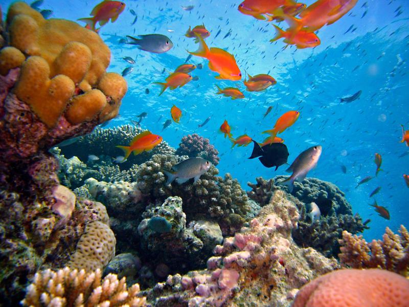 www.cruise-maldives.com reef