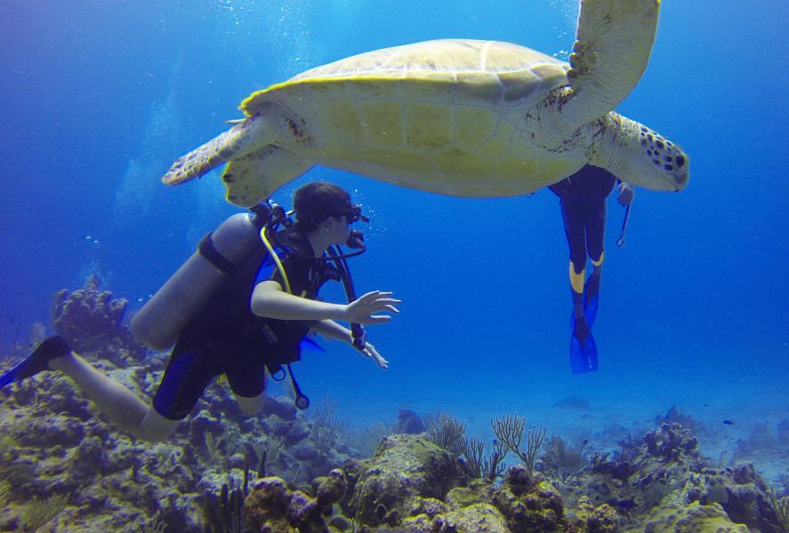 www.cruise-maldives.com turtle
