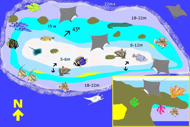 Site Map of Nelivaru Thila Dive Site, Maldives