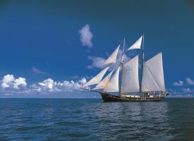 Sea Shell on sail