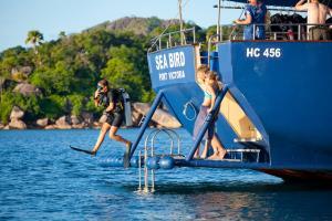 Sea Bird dive platform