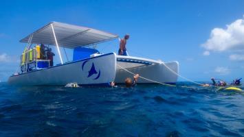Dive catamaran Phoenix