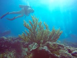 Puerto Plata Diving