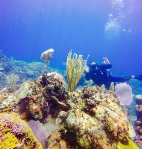 SeaPro Divers Puerto Plata