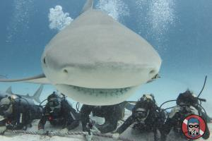 BULL SHARK ENCOUNTER 1 TANK DIVING ACTIVITY