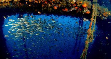 Wreck diving - King Cruiser Wreck, Phuket, Thailand.