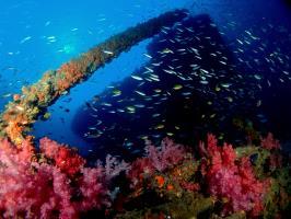 King Cruiser wreck dive.