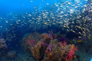 Schools of tropical fish on King Cruiser wreck.