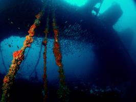 Wreck diving Phuket Thailand.