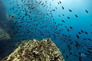 The life in the marine reserve