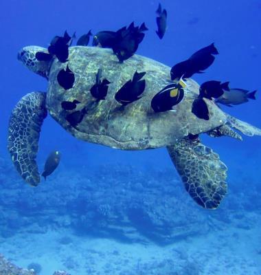 Fathom Five Pro Divers