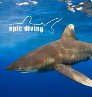 Epic Diving