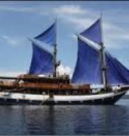 Sea Safari 6