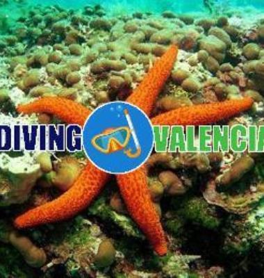 Diving valencia