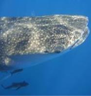 Destin Scuba Diving