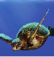 A Deep Blue Dive