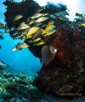 Manchones reefs